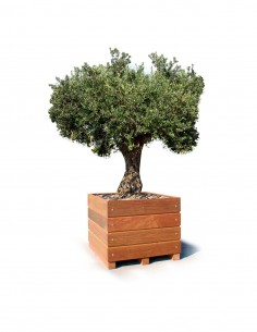 Bac arbre Olivier